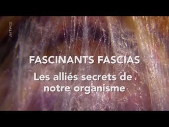 fascinats-fascias-arte